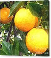 Orange On Tree Canvas Print