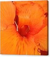Orange Petals Canvas Print