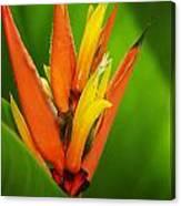 Orange Pocket Fold Canvas Print