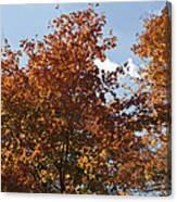 Orange Pop Canvas Print