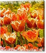 Orange Princess Fringed Tulips Canvas Print