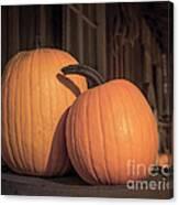 Orange Pumpkins Canvas Print