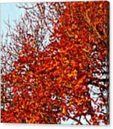 Orange Red Blanket Canvas Print