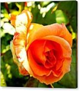 Orange Rose Bloom Canvas Print