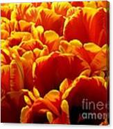 Orange Sea Canvas Print