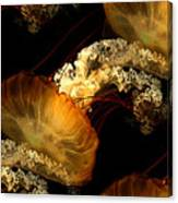 Orange Sea Nettle Canvas Print