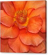 Orange Sherbert Canvas Print