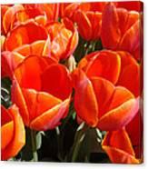 Orange Spring Tulip Flowers Art Prints Canvas Print