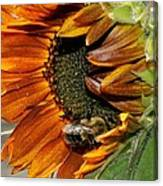 Orange Sunflower And Bee Canvas Print