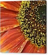 Orange Sunflower Close Up Canvas Print