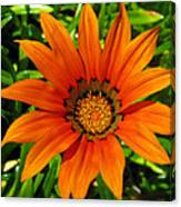 Orange Sunshine Canvas Print