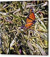 Orange Swallowtail Canvas Print
