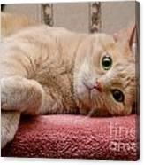 Orange Tabby Cat Lying Down Canvas Print