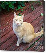 Orange Tabby On Porch Canvas Print