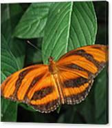 Orange Tiger Butterfly Or Banded Orange Canvas Print