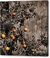 Orange Tree On Rustic Background Canvas Print