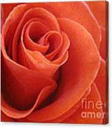 Orange Twist Rose 3 Canvas Print
