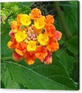 Orange Wildflower Canvas Print