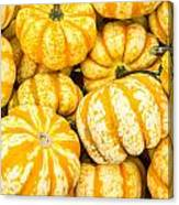 Orange Winter Squash On Display Canvas Print