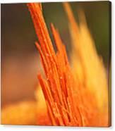 Orange Wood Fragment On Stump Canvas Print