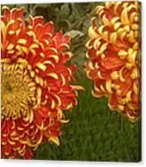 Orange-yellow Chrysanthemums Canvas Print