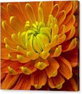 Orange Yellow Mum Canvas Print