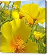 Orange Yellow Poppy Flowers Meadow Art Canvas Print