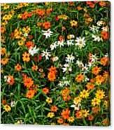 Orange Yellow White Daisies Canvas Print