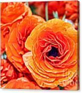 Orange You Happy Ranunculus Flowers By Diana Sainz Canvas Print