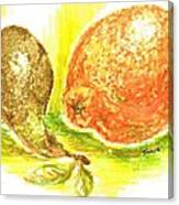 Oranges And Pears Canvas Print