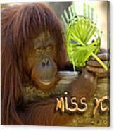 Orangutan Female Canvas Print