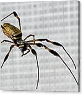 Orb Spider 4 Canvas Print