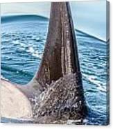 Orca Apex II Canvas Print