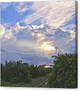 Orchard And Birds Canvas Print