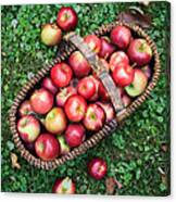 Orchard Fresh Picked Apples Canvas Print