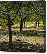 Orchard In West Michigan No. 279 Canvas Print