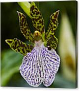 Orchid 11 Canvas Print