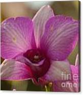 Orchid 152 Canvas Print