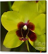 Orchid 153 Canvas Print
