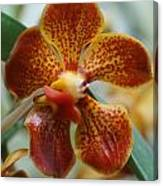 Orchid 195 Canvas Print
