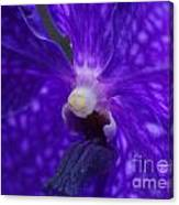 Orchid 196 Canvas Print