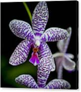 Orchid #3 Canvas Print