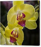 Orchid #5 Canvas Print