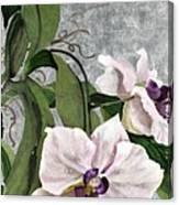 Orchid A - Phalaenopsis Canvas Print