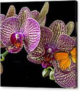 Orchid And Orange Butterfly Canvas Print