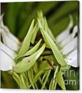 Orchid Arms Canvas Print