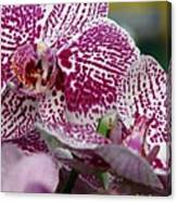 Orchid Art Canvas Print