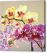 Orchid Art Prints Orchids Flowers Floral Bouquets Canvas Print