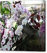 Orchid Branch Canvas Print