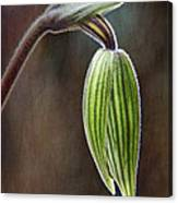 Orchid Bud Canvas Print